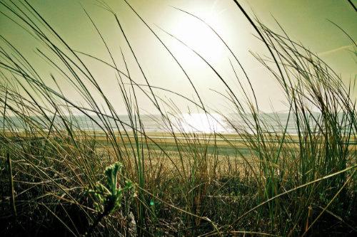 Gräser mit Meerblick